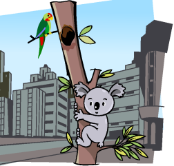 Koala and swift parrot